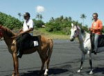 family bali tours - Bali Horse Riding1
