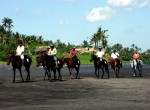 family bali tours - Bali Horse Riding5