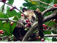 family bali tours - luwak coffee