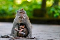 family bali tours - monkey forest